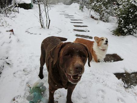 今日はまた雪ですね