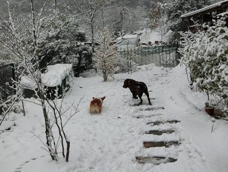雪の中でボール遊び