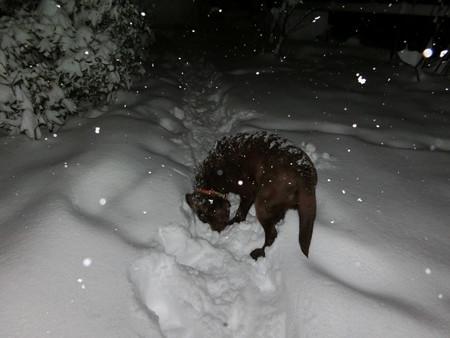 雪の下が気になる