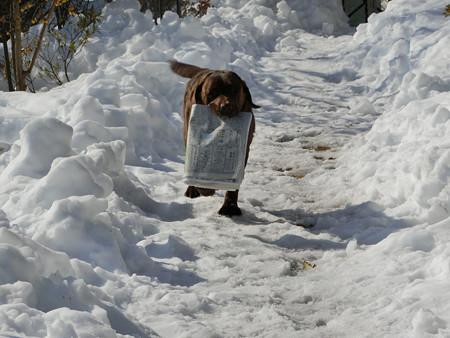 雪の日もちゃんとお仕事