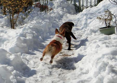 雪の庭を走る