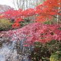 2013-12-08_実篤公園の紅葉