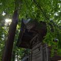 写真: [南陽市] 熊野大社・本殿裏