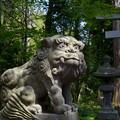 写真: 十和田神社・狛犬