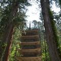 写真: 出羽神社・五重塔