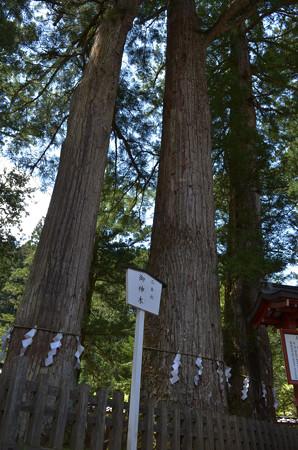 日光二荒山神社・三本杉