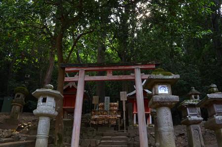 春日大社(広瀬神社・赤乳白乳両神社遥拝所・葛城神社)
