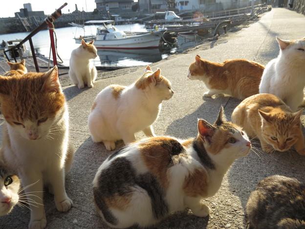 港町のネコ
