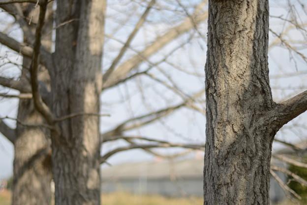 写真: カールツァイス 50mm f1.8 D800 クロップ
