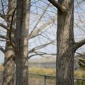 写真: カールツァイス 50mm f1.8 D800