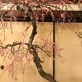 写真: IMG_0980大阪天満宮・大盆梅展・見驚枝垂