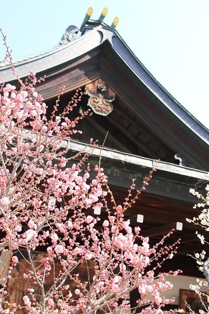 IMG_1098大阪天満宮・梅花殿・紅梅