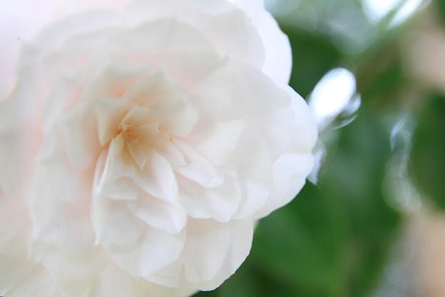 IMG_6111神苑・春の山・白乙女