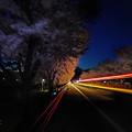 Photos: 夜桜、翔る