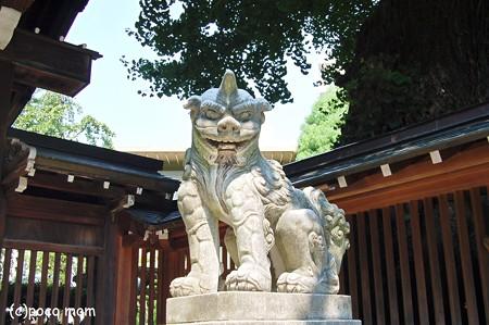 櫛田神社狛犬2012年08月18日_DSC_0606
