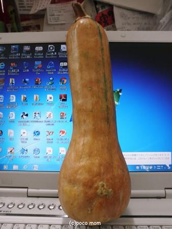 バターナッツカボチャ2012年10月31日_PA311157
