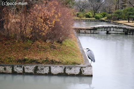 東寺宝蔵のお堀のサギ 2013年01月14日_DSC_0516