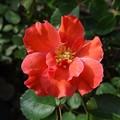 写真: 2izumu24081103 (563x422)