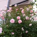 写真: furans24060201 (640x480)