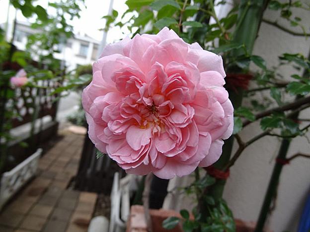 写真: furans24072402 (640x480)