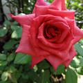 写真: 14padhi25080801 (750x563)