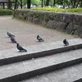 Photos: 宮崎中央公園5