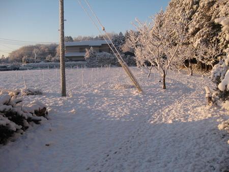 2月5日、雪の散歩♪の巻