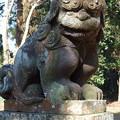 蛟もう神社 奥の宮 狛犬(吽形)