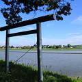 Photos: 水田と鳥居
