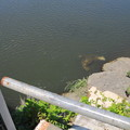 写真: 常総橋と小貝川