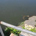 常総橋と小貝川