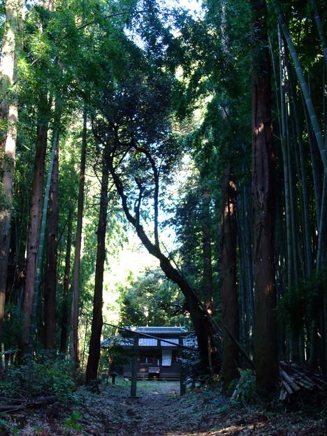 Photos: 森の中の神社