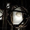 写真: なら燈花会 浅茅ヶ原 2
