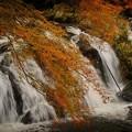 Photos: 赤朽葉に滴る