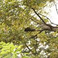 Photos: 木のぼりしたリス
