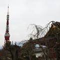 旧台徳院と東京タワー