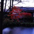 一部だけ色づく紅葉
