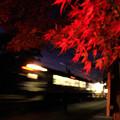 夜の赤紅葉