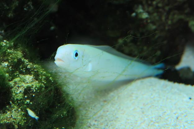パラオ共和国の魚