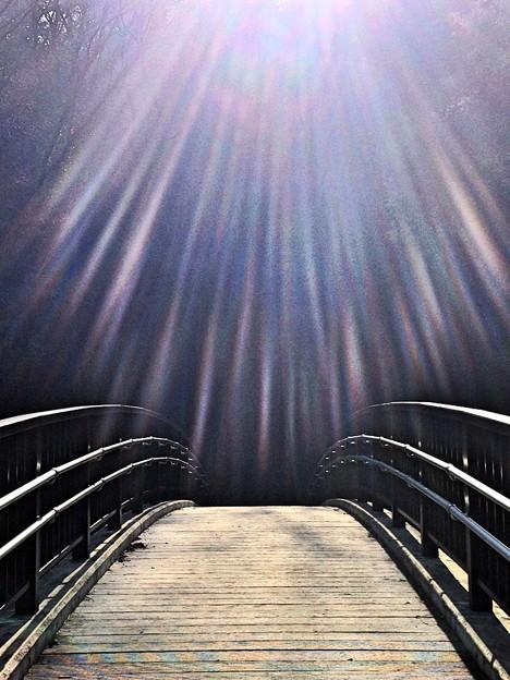 太陽の光と橋