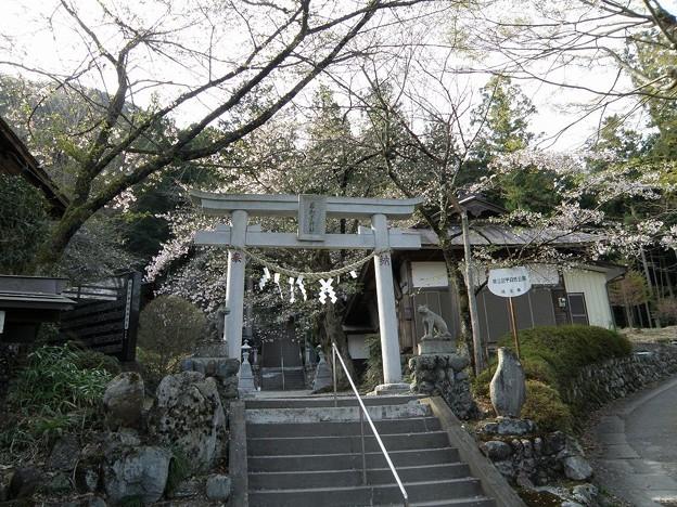 清雲寺隣の若獅子神社 105