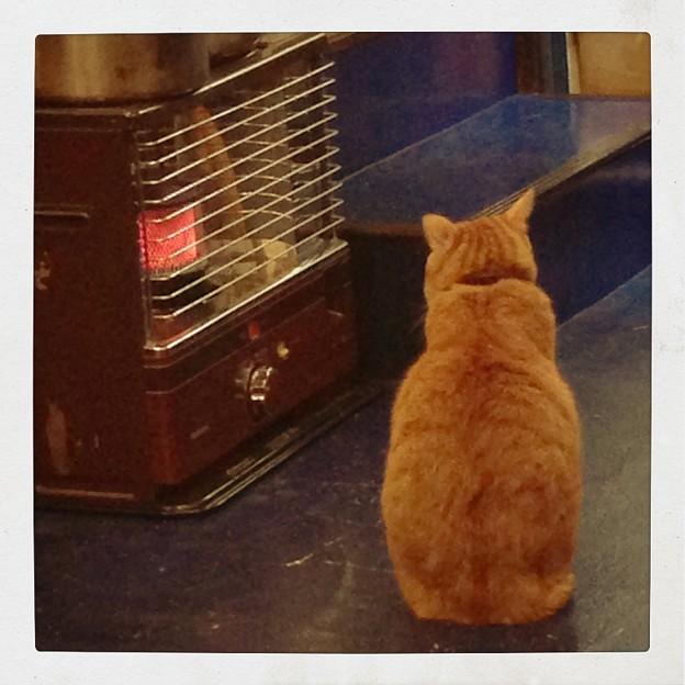 猫のいるカフェ