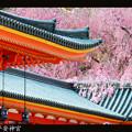 Photos: 平安神宮#2