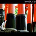 Photos: 千本鳥居#1