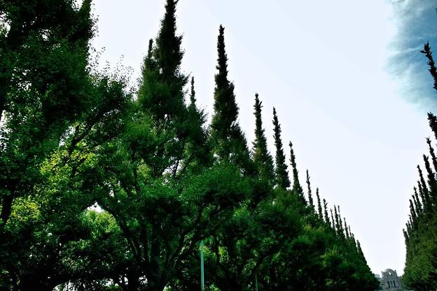Photos: 東京の神宮外苑にある絵画館への道