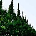 写真: 東京の神宮外苑にある絵画館への道