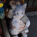 Photos: 狸に逮捕される猫2
