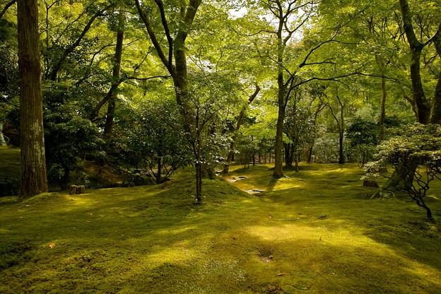 Photos: 苔に覆われた銀閣寺の庭