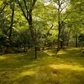 苔に覆われた銀閣寺の庭