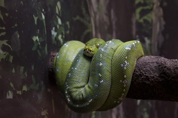 蛇ってこうやっても眠るんだ